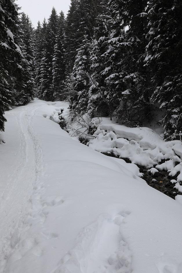 Schneeschuhwanderung in Gargellen - Image 4