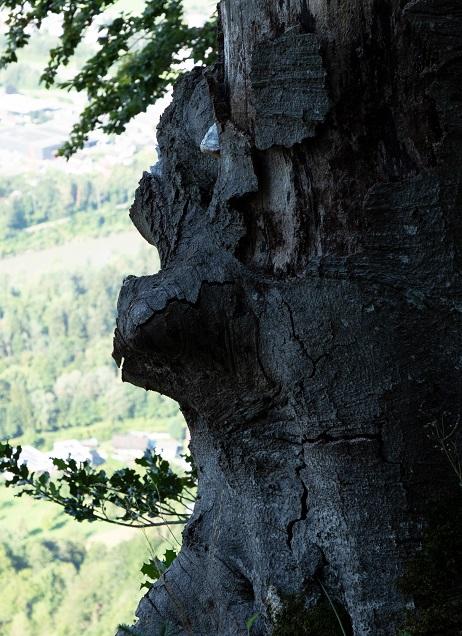 Gebhardsberg-Känzeleweg - Image 6