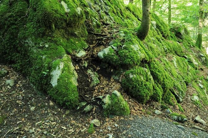 Gütle-Rappenloch-Alploch-Kirchle - Image 29