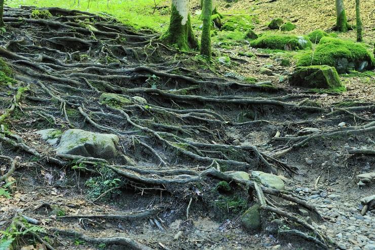 Gütle-Rappenloch-Alploch-Kirchle - Image 30