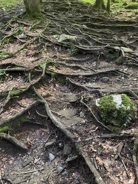 Gütle-Rappenloch-Alploch-Kirchle - Image 33