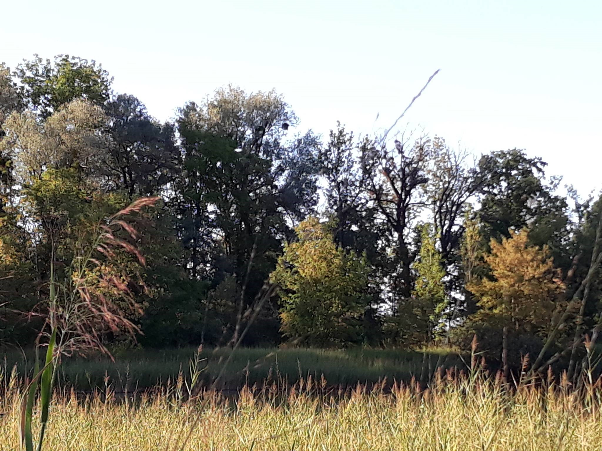 Birken – Schwarzes Zeug