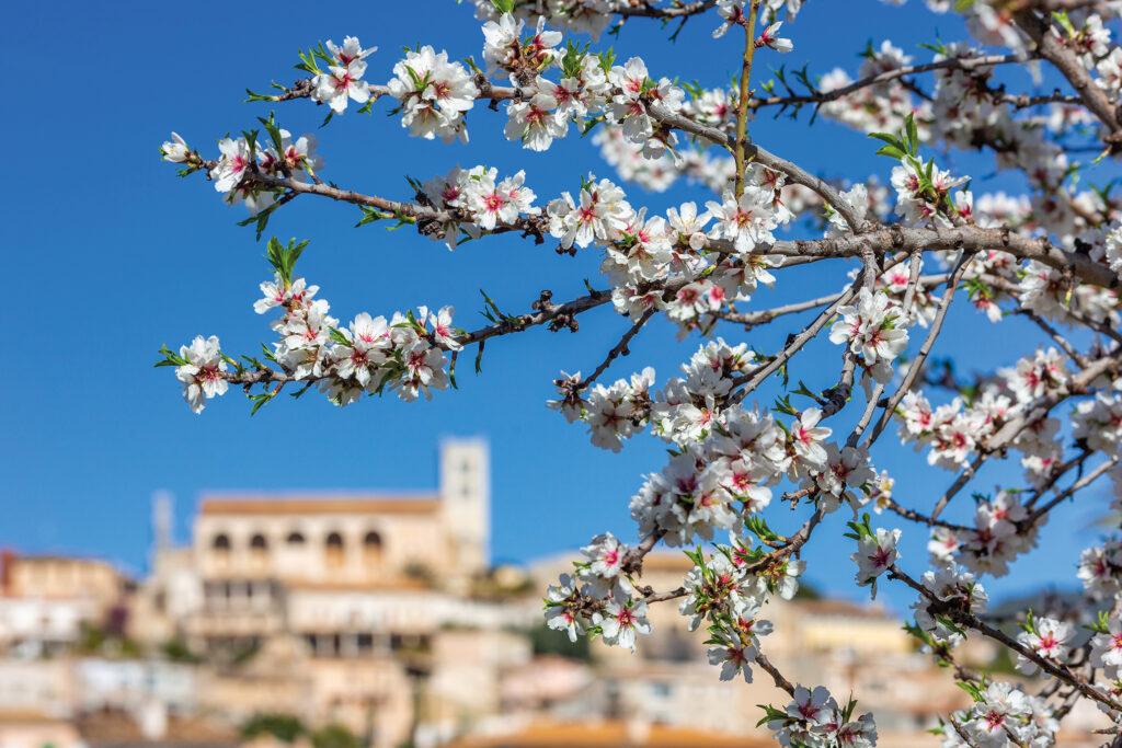 Reise zur Mandelblüte nach Mallorca 2022